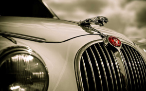 Jaguar Wallpaper Free Download