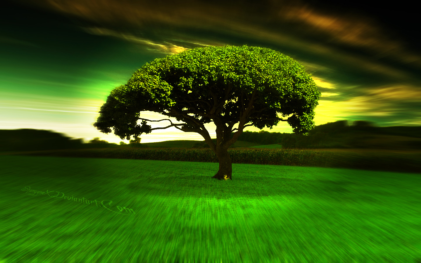 Place Tree Wallpaper HD