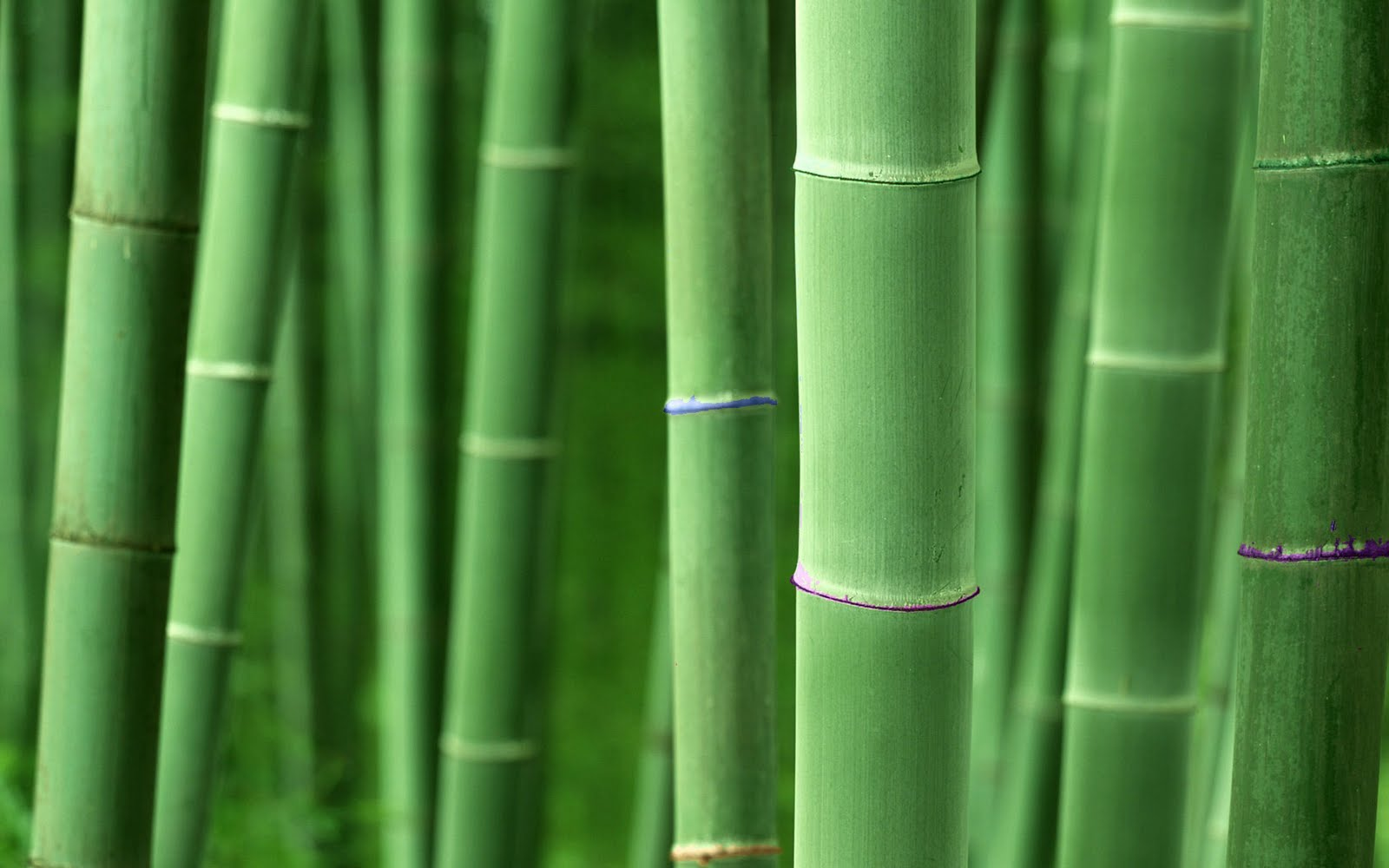 Bamboo Wallpaper High Definition