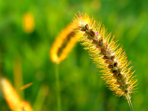 Beautiful Macro Plants Wallpapers