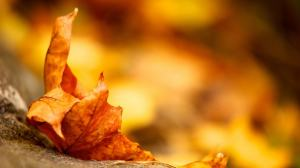 Fall Autumn Season Wallpaper Nature Background