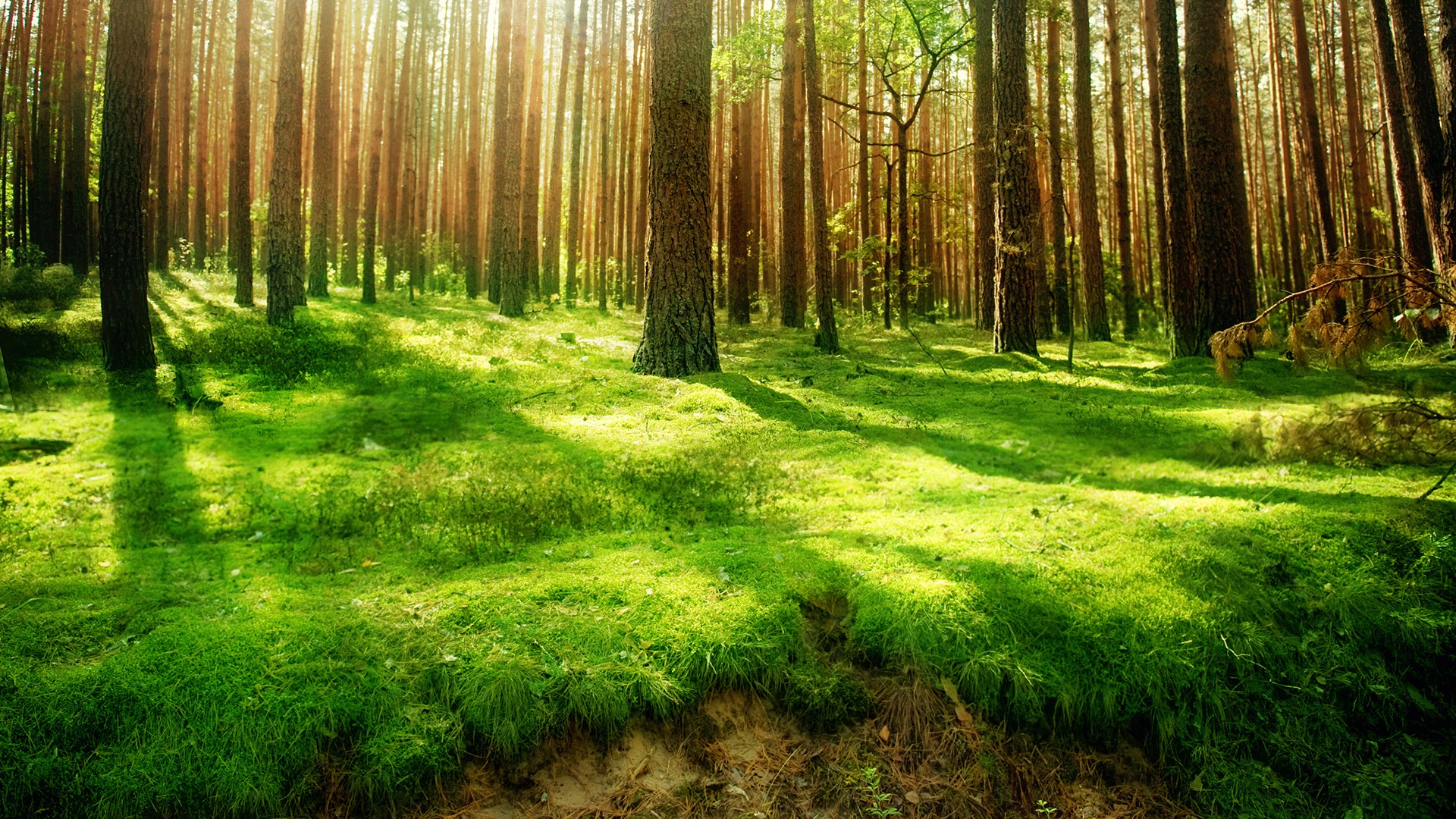 Forest Wallpaper Android Phones Free