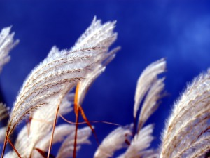 Grass Wind Wallpaper Image Backgrounds