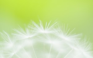 Green Flower Soft Focus Photography Wallpaper
