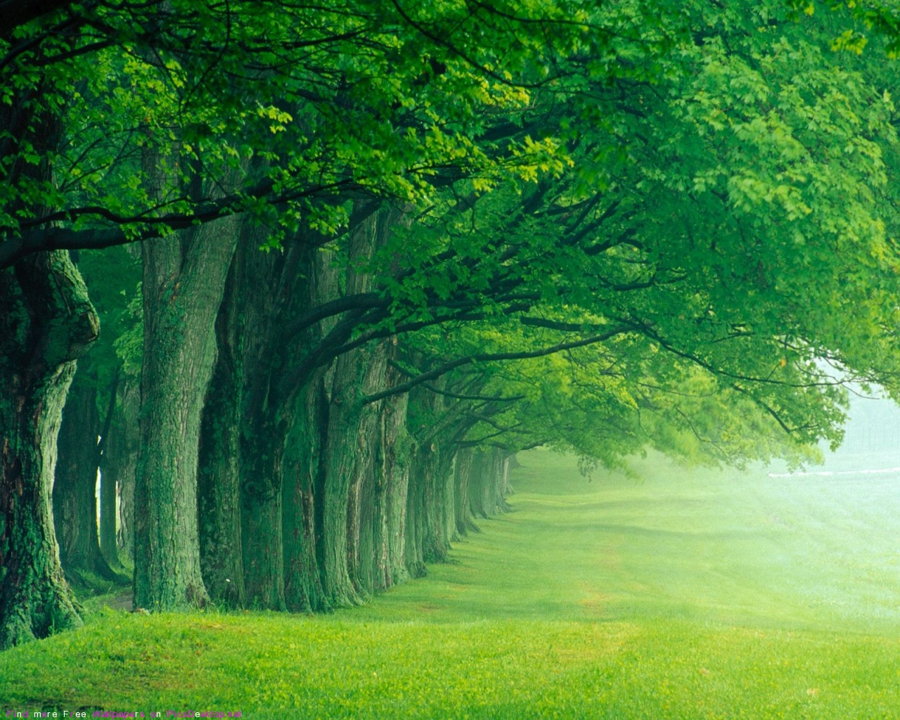 Green Forest Wallpaper High Definition