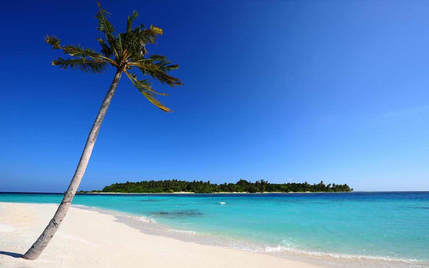 Maldivian Beach Background 1080p