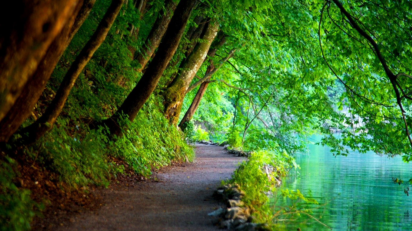 Nature Green Wallpaper Background PC