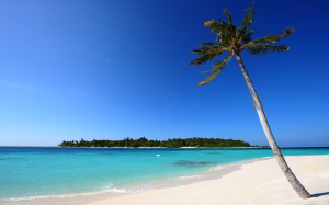 Palm White Sand Wallpapers HD