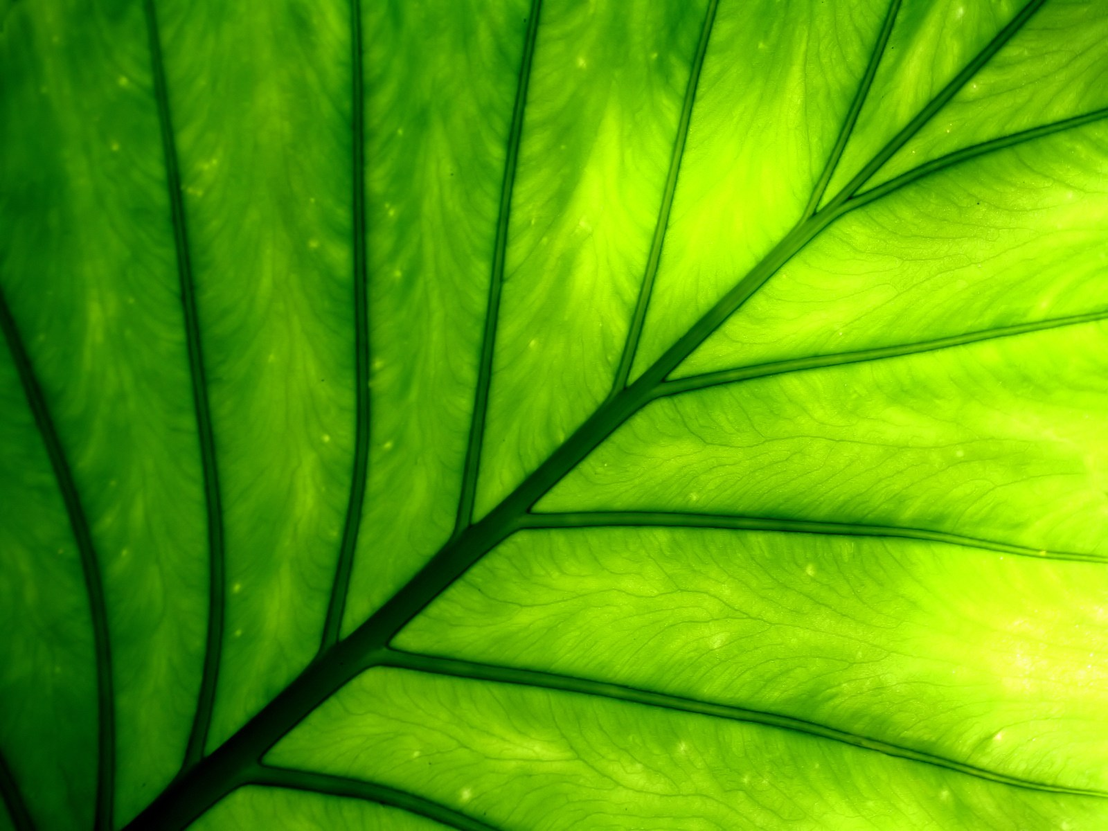 Plant Wallpaper Green Vista
