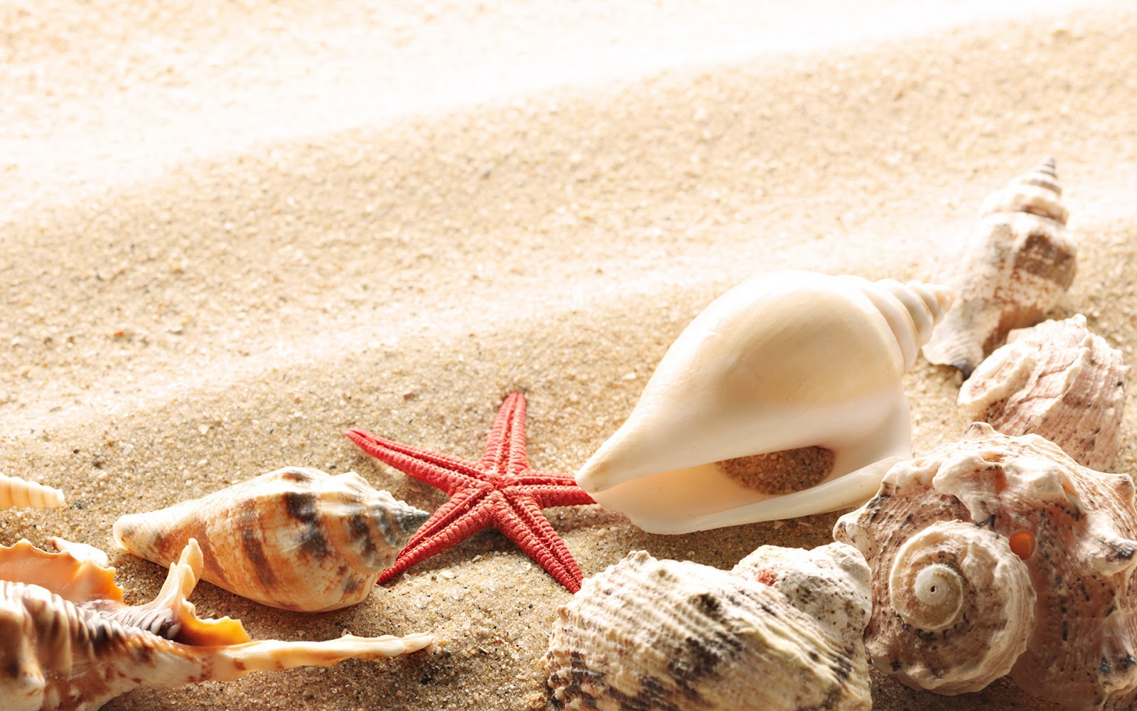 Sand Seashells Wallpapers HD