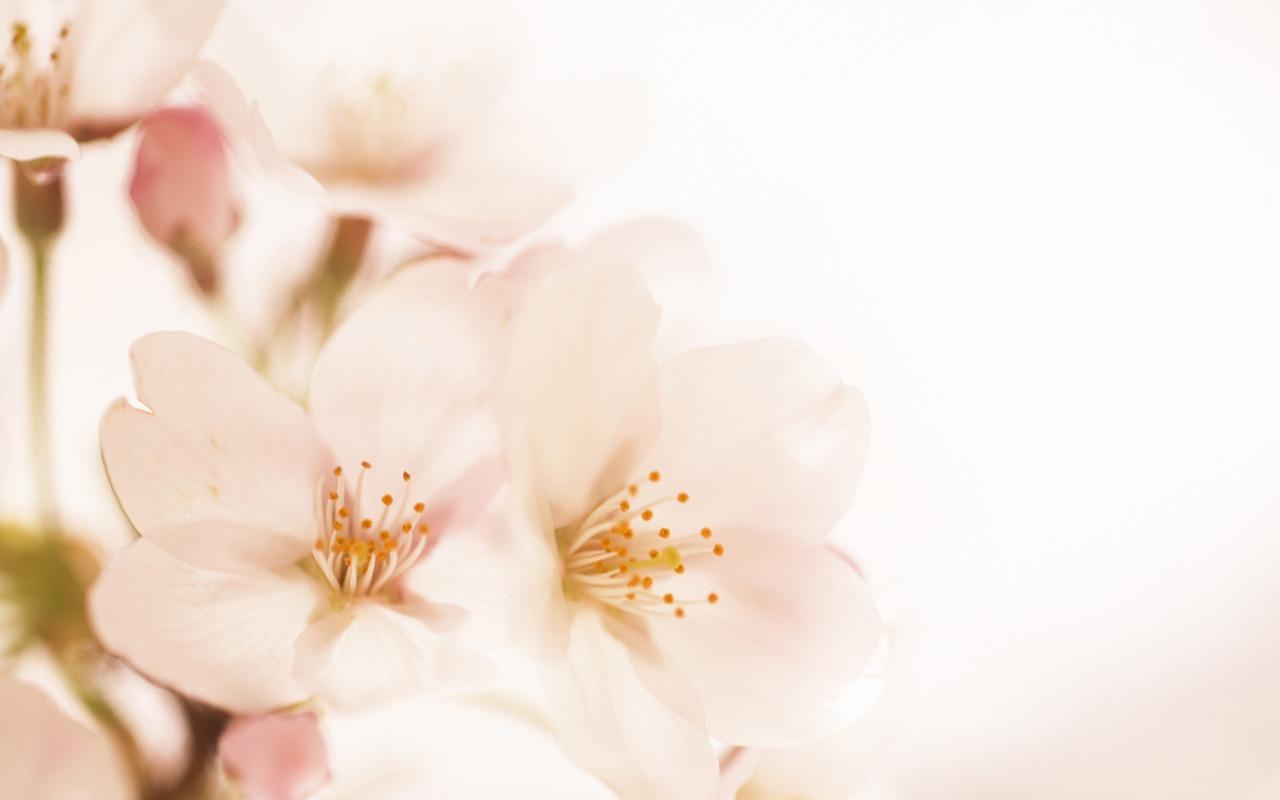 Soft Focus Wallpaper Flowers