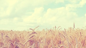 Soft Wallpaper Field HD