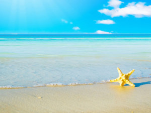 Star Fish Wallpaper Beach HD
