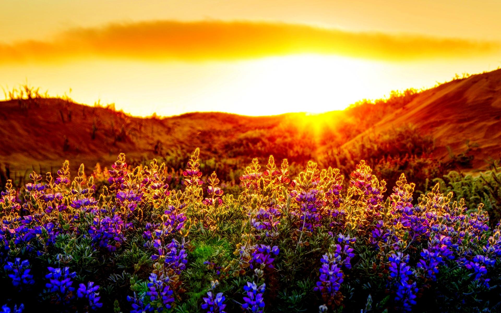 Sunset Summer Wallpaper Backgrounds