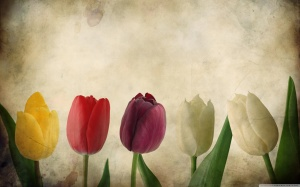 Tulips Vintage Wallpapers HD