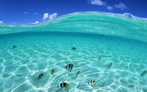 Under Sea Wallpaper HD