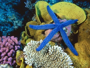 Underwater Wallpaper Blue Starfish