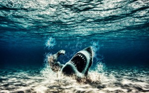 Underwater Wallpaper Iphone Mobiles Shark
