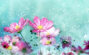 Beautiful Flowers Wallpaper HD Desktop