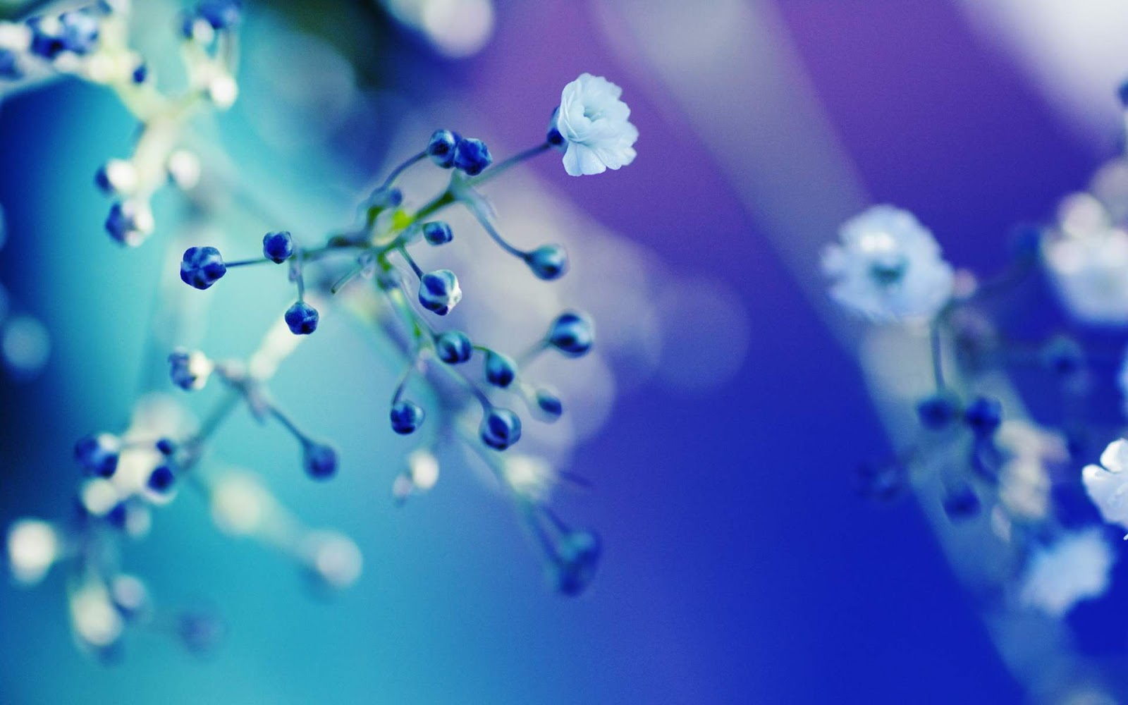 Blue Flowers Close Up Wallpaper Background HD