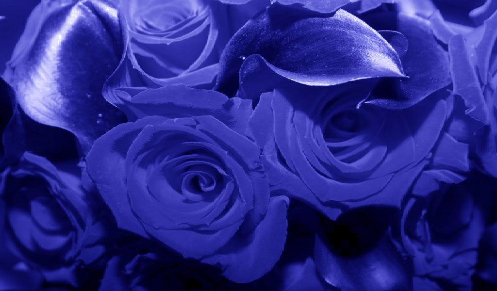 Blue Wallpaper PC Desktop Android Flowers