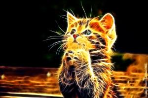 Cats 3D Wallpaper HD Desktop