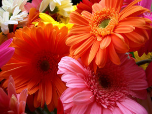 Flowers Beautiful Wallpaper Widescreen