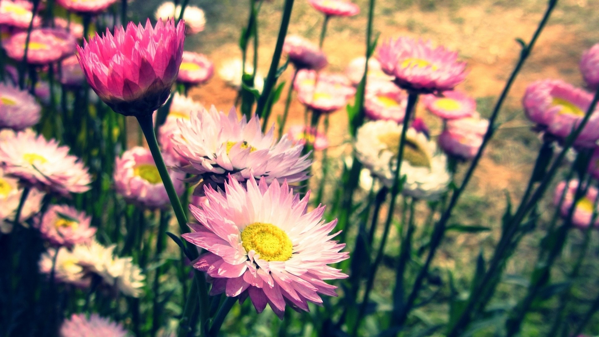 Flowers Macro Wallpaper High Definition