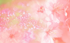 Flowers Pink Wallpaper Widescreen Free