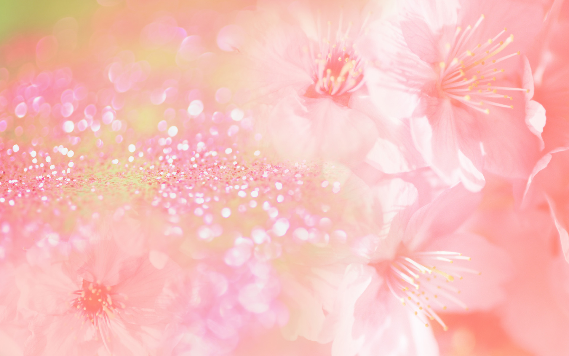 Flowers pink wallpaper widescreen free 4755 wallpaper walldiskpaper flowers pink wallpaper widescreen free mightylinksfo