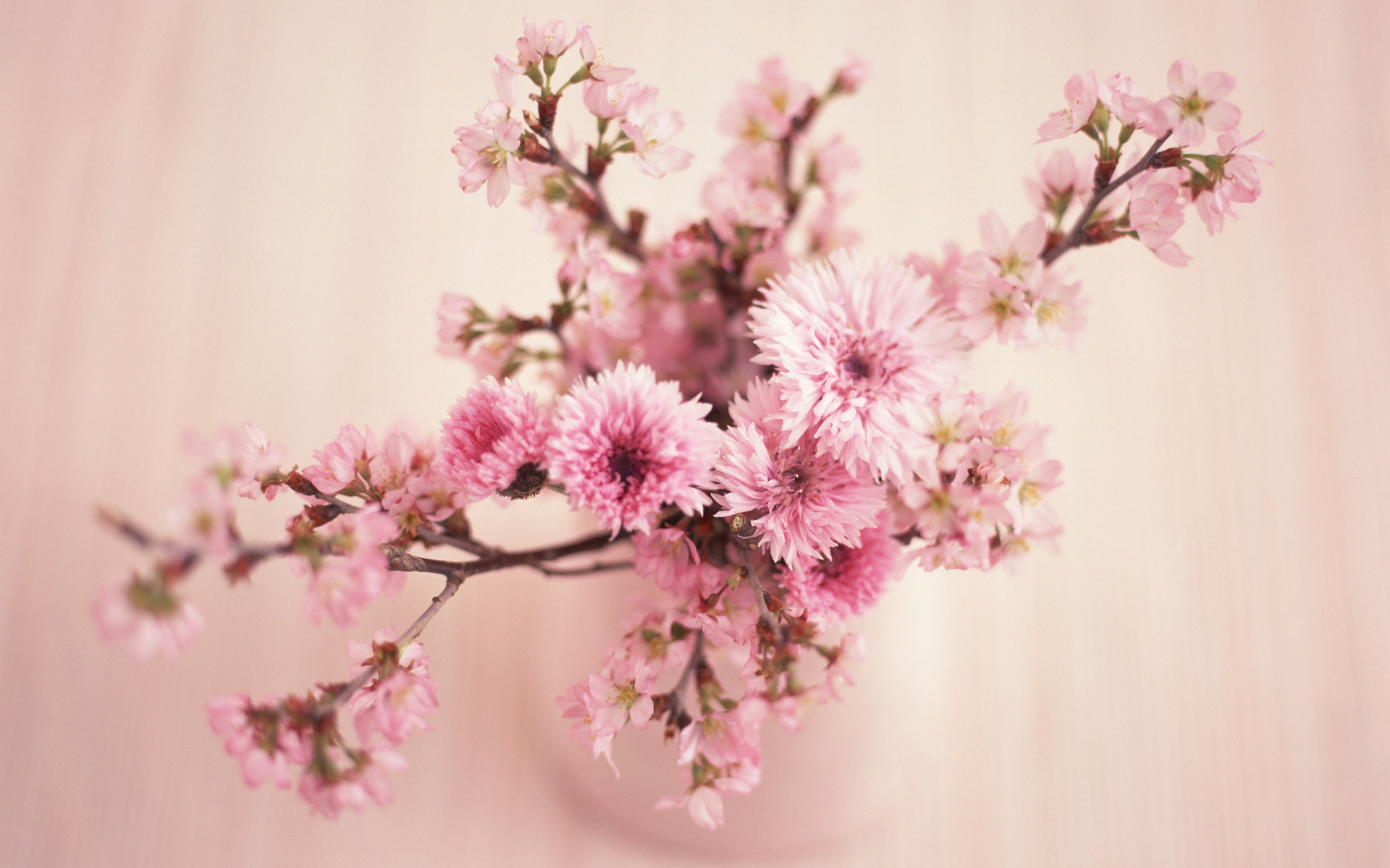 Pink Flowers Retro Wallpaper Coral