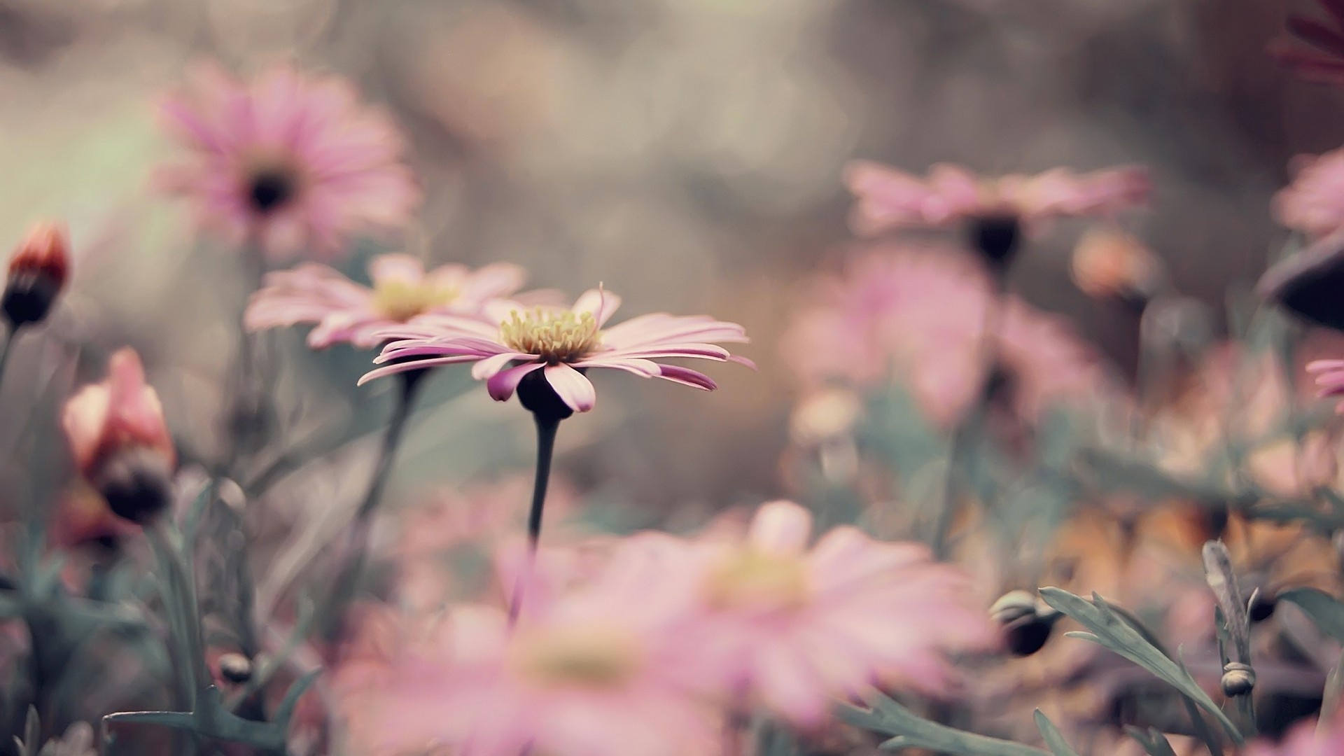 Flowers Spring Wallpaper Best Collection