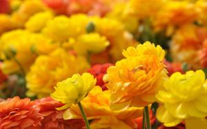 Flowers Wallpaper Mobile HD