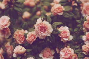Flowers Wallpaper Windows Themes