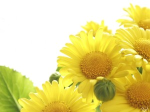 Flowers Wallpaper Yellow HD Desktop
