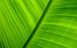 Green Wallpaper Background Computer
