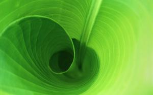Green Wallpaper Desktop Background