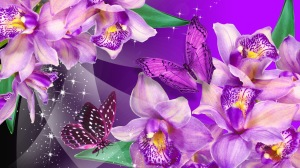 Orchid Purple Flowers Wallpaper