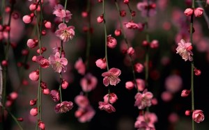 Pink Floral Flowers Wallpaper Photos