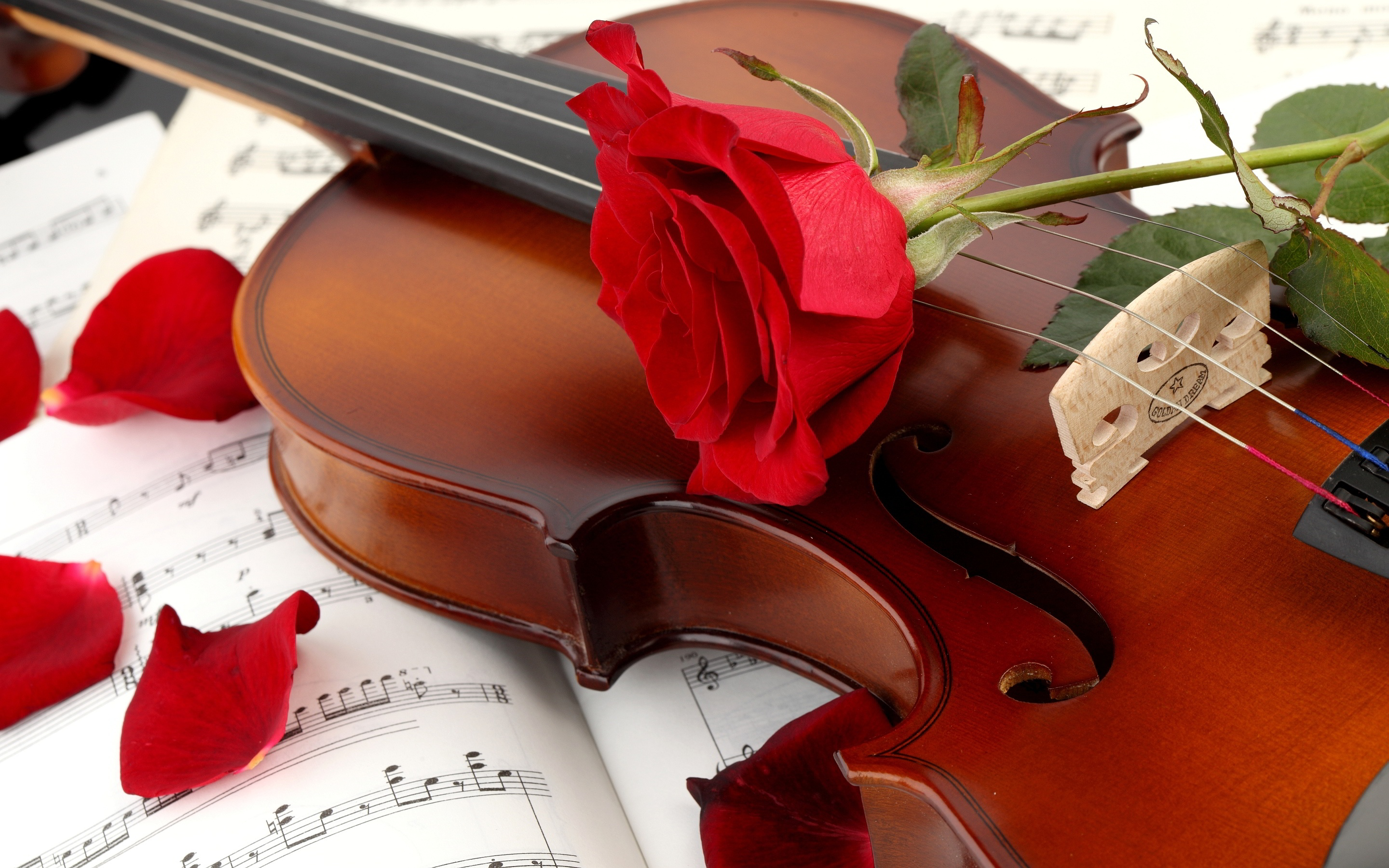 Violin Red Wallpapers HD