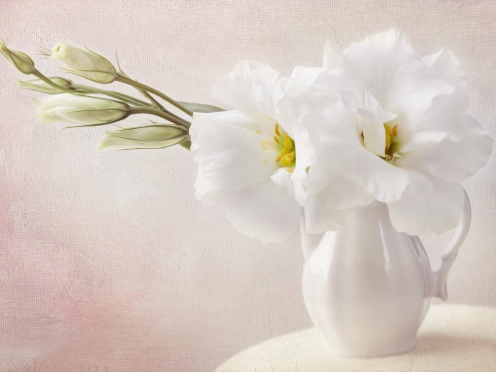 White Flowers Wallpaper 1024×768