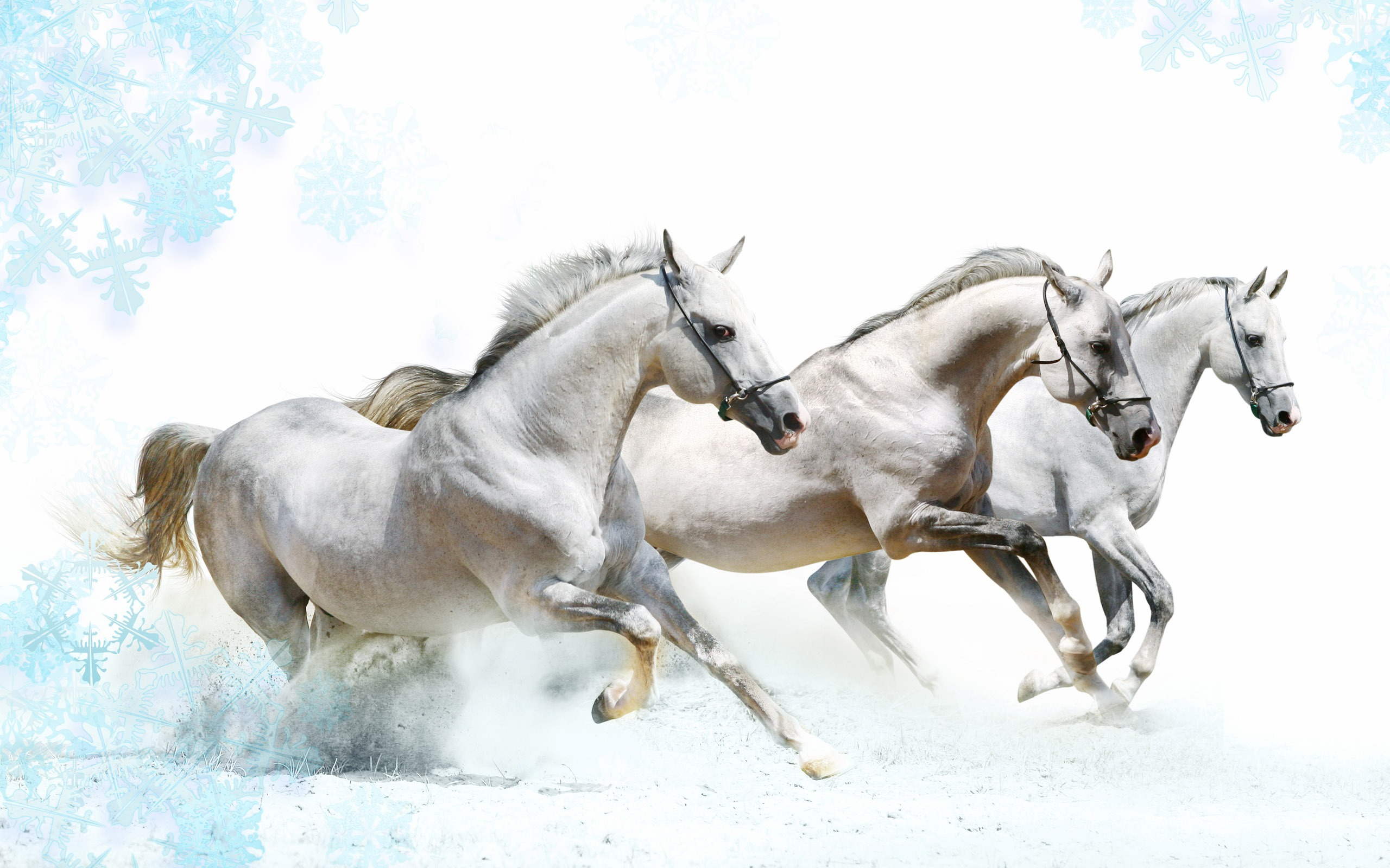 Animals Wallpaper Widescreen Horse