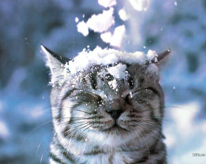 Cat Funny In Snow Wallpapers