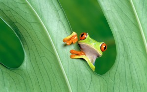 Frog Cute Wallpaper Background