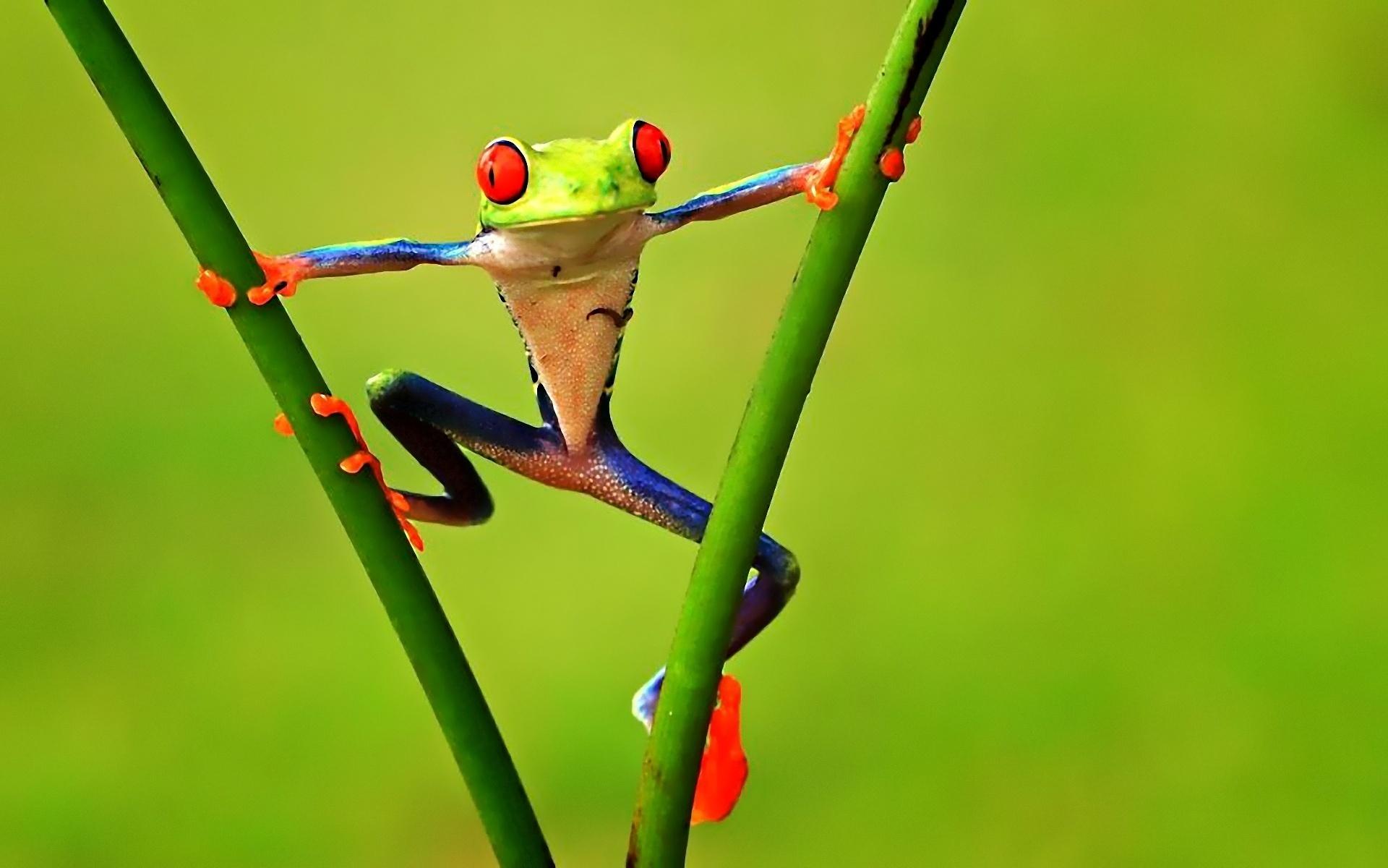 Frog Wallpaper 3D