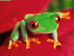 Frog Wallpaper Fullscreen HD