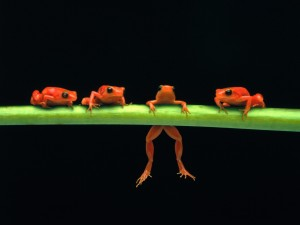 Frog Wallpaper Orange