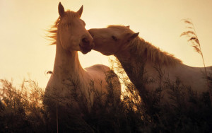 Horse Wallpaper Animals Beautiful
