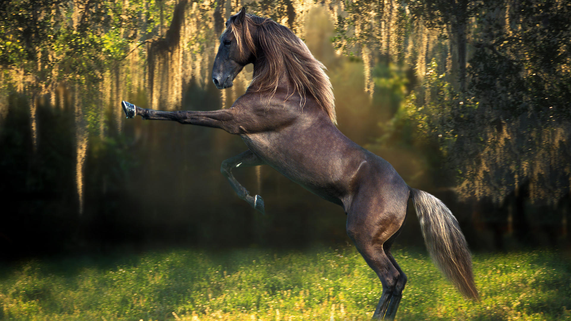Horse Wallpaper Beautiful HD