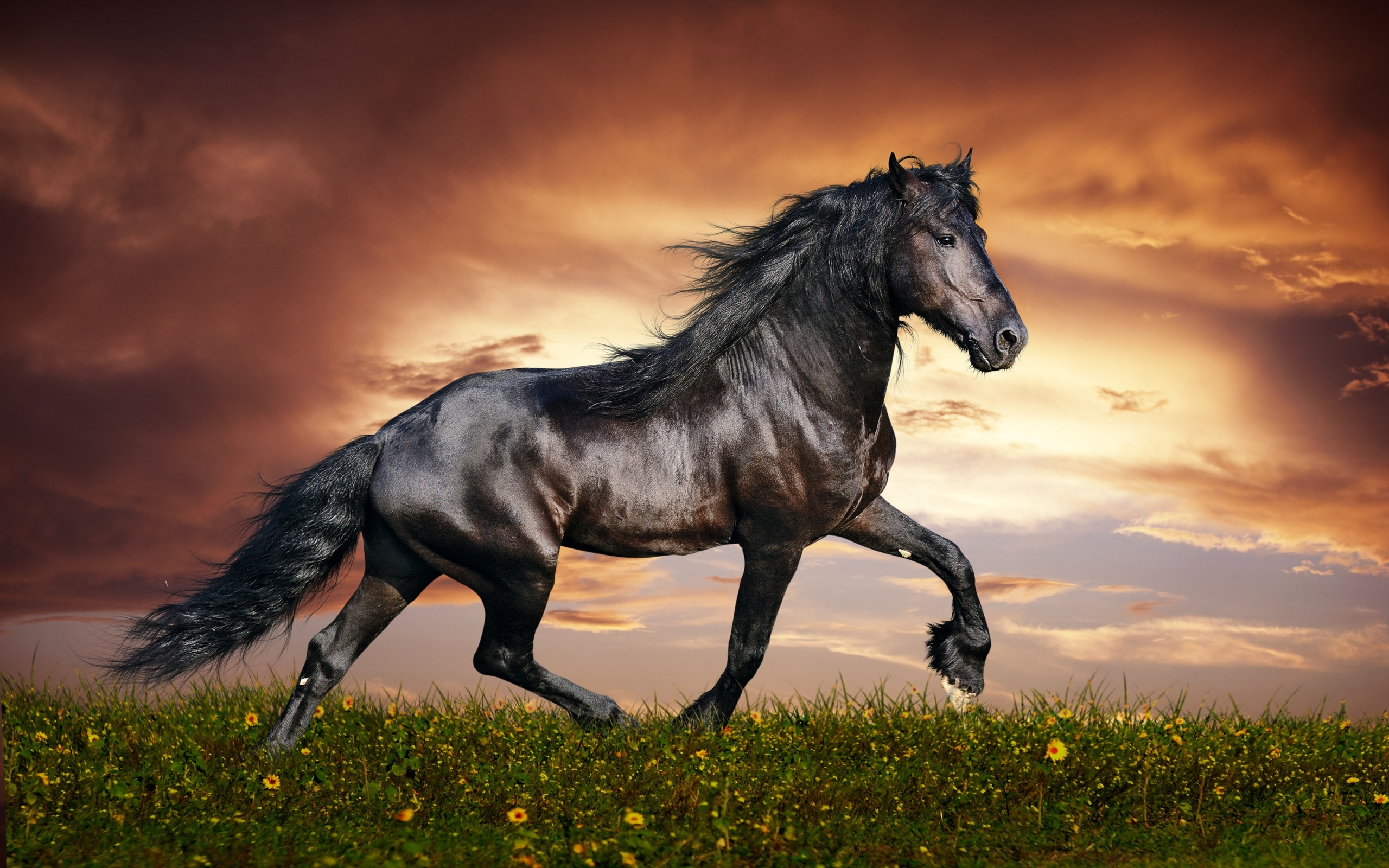 Horse Wallpaper Free Downloads